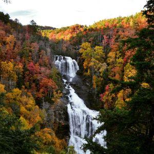 Fall in Falling Colors